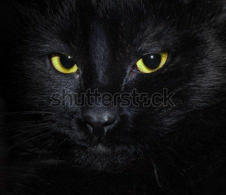 Kaganiec ciemne komputera oczy malarstwo Zdjęcia stock © zven0