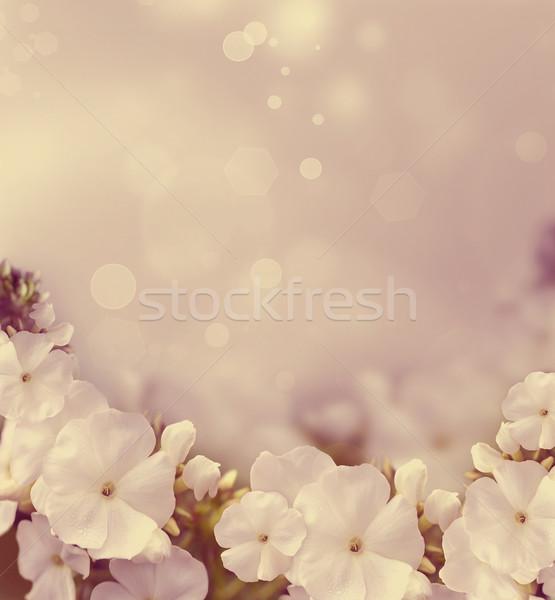 Természetes gyönyörű fehér virágok retró stílus tavasz fény Stock fotó © zven0