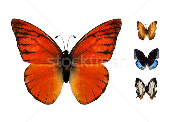 butterfly Stock photo © zven0