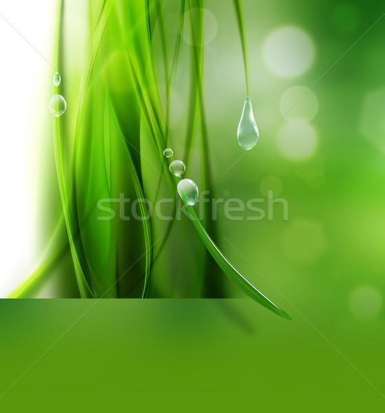 Foto stock: Natureza · abstrato · gotas · orvalho · água · grama