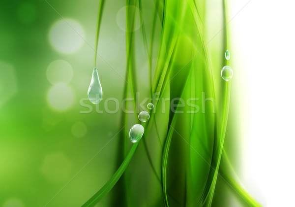 Doğa soyut damla çiy çim güzellik Stok fotoğraf © zven0