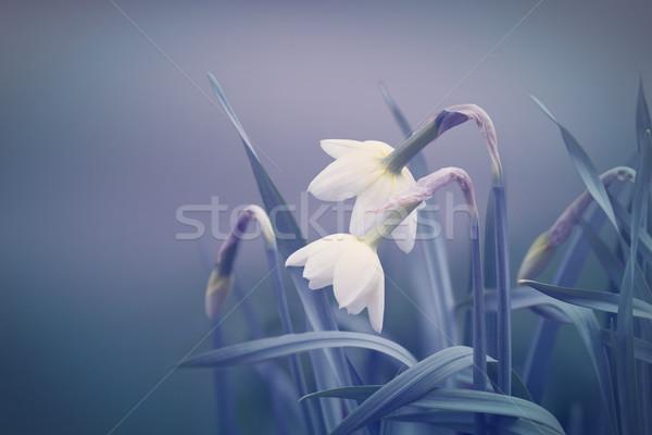 Absztrakt tavasz természet levél nyár űr Stock fotó © zven0