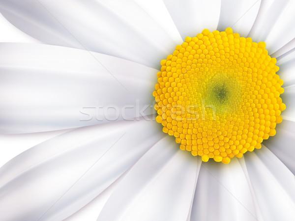 chamomile Stock photo © zven0