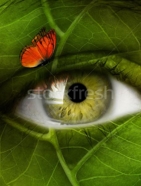 eye leaf Stock photo © zven0