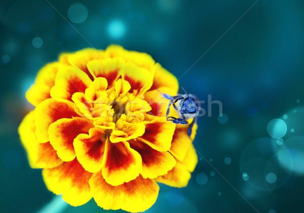Természet méh sárga virág virág virágok kert Stock fotó © zven0