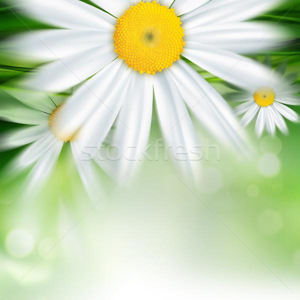 Natureza abstrato flores grama folha verde Foto stock © zven0