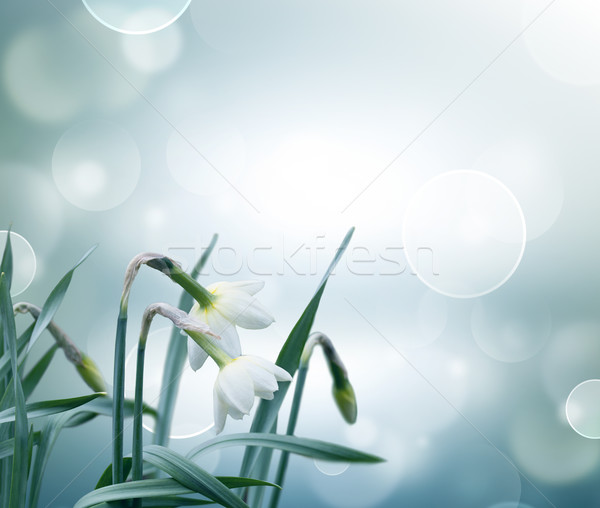 abstract spring background Stock photo © zven0