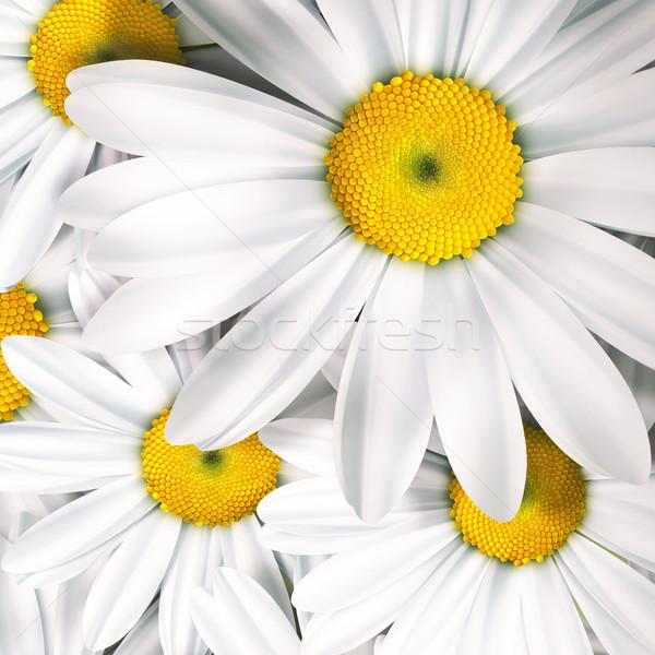 ромашка весны свет лист красоту Сток-фото © zven0
