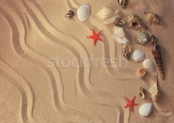 Summer background Stock photo © zven0