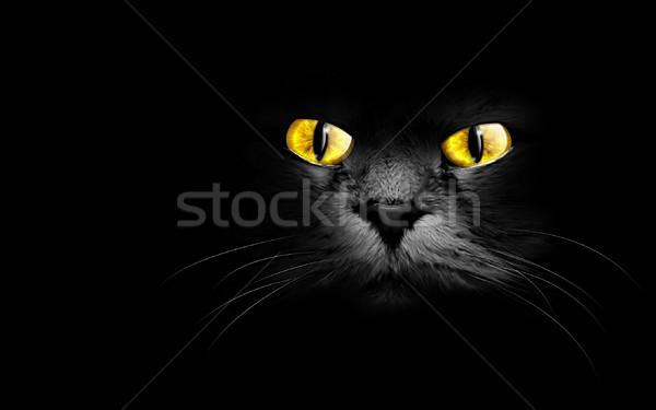 黒猫 暗い コンピュータ 絵画 動物 ストックフォト © zven0