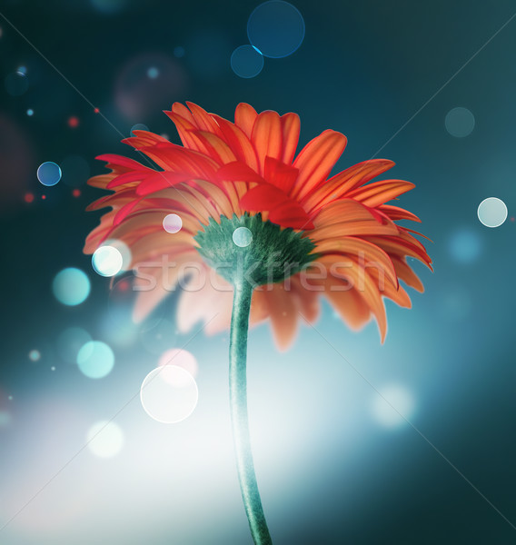 bokeh background with red flower Stock photo © zven0