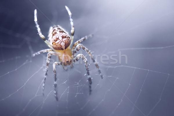 Araignée toile d'araignée croix jardin animaux peur Photo stock © zven0