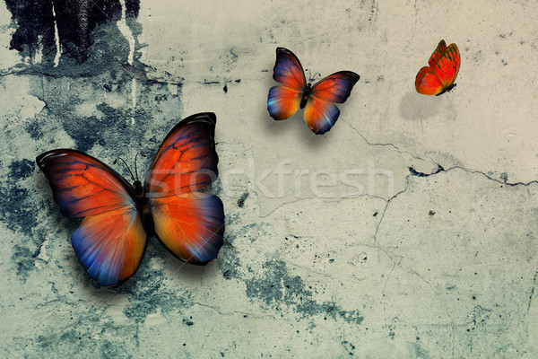 butterflys Stock photo © zven0
