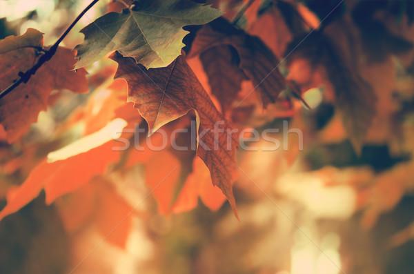 Autumn background Stock photo © zven0