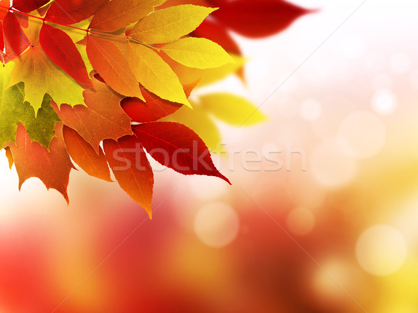 Herbst abstrakten hellen herbstlaub raum for Raum pflanzen