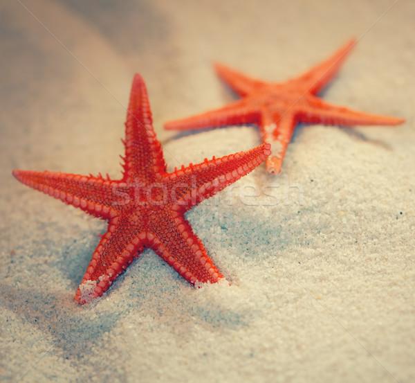 Nyár tenger homok tengeri csillag tengerpart nap Stock fotó © zven0