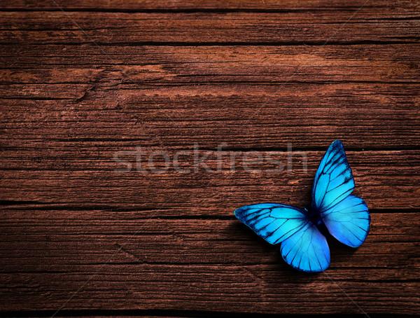 natural background Stock photo © zven0