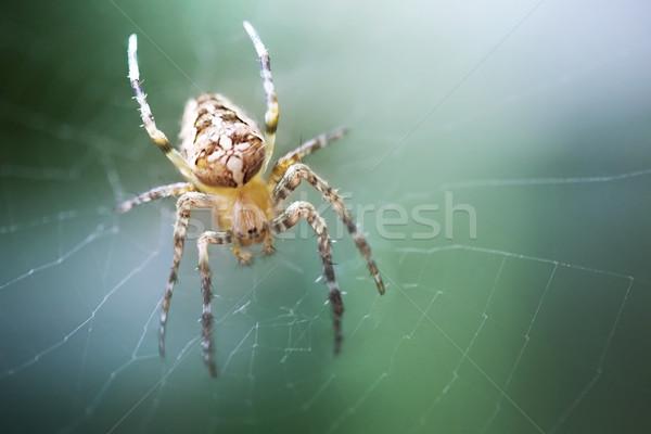 Spider паутину крест саду животного страхом Сток-фото © zven0