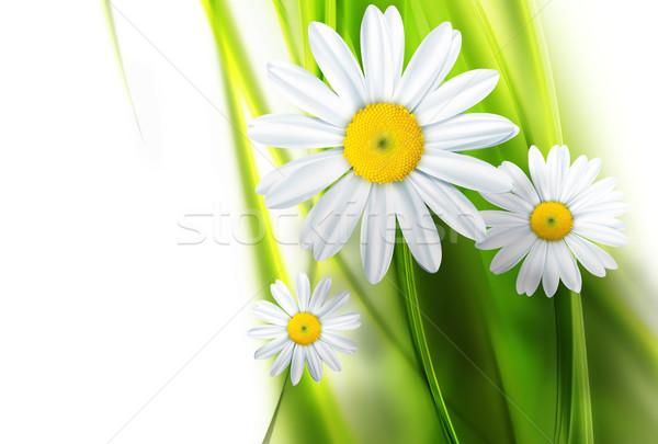 Natureza abstrato grama folha quadro campo Foto stock © zven0