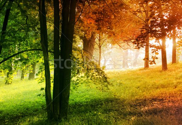 Sonbahar yaz orman bahar doğa turuncu Stok fotoğraf © zven0