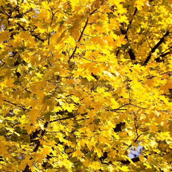Stock photo: autumn leaves
