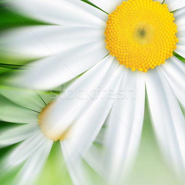 Természet absztrakt virágok fű levél szépség Stock fotó © zven0