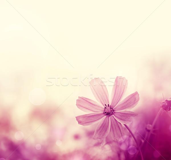 Полевые цветы природного цветы весны фон лет Сток-фото © zven0
