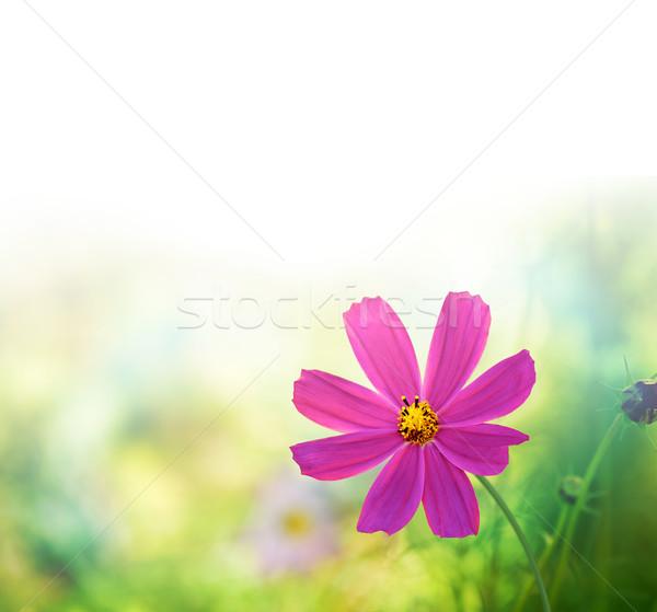 wildflowers Stock photo © zven0